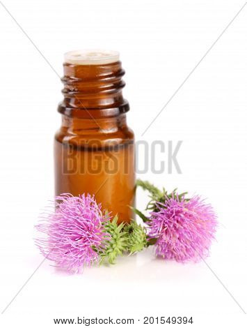 thistle oil and milk thistle flower isolated on white background.