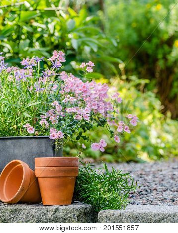 Cottage garden - beutiful flowers in pots with table and chair on the background