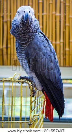 Parrot . African Grey Parrot. Parrot Jaco