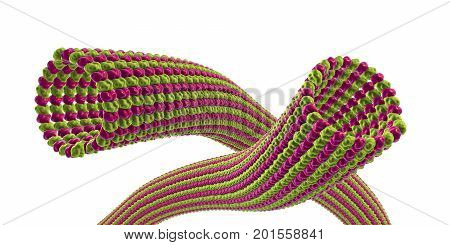 Microtubule isolated on white background, 3D illustration. A polymer composed of a protein tubulin, it is a component of cytoskeleton involved in intracellular transport, cellular mobility and nuclear division