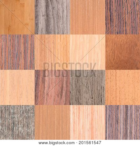 Collage Of Different Natural Wooden Texture, Tree Veneer Background