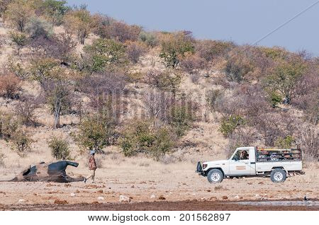ETOSHA NATIONAL PARK NAMIBIA - JUNE 27 2017: Unidentified rangers towing a dead elephant at the Dolomite Waterhole in the western part of Etosha. It was determined that it died of anthrax