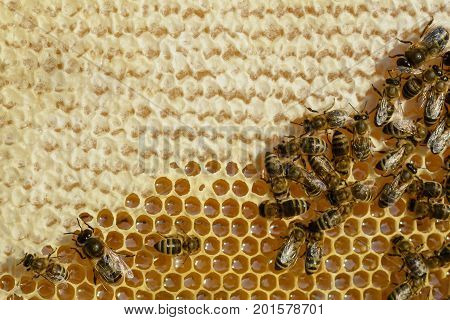 The bees convert the fresh nectar into a delicious and healthy honey. Honeycomb