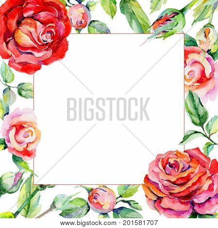 Wildflower rosa flower frame in a watercolor style. Full name of the plant: rosa. Aquarelle wild flower for background, texture, wrapper pattern, frame or border.