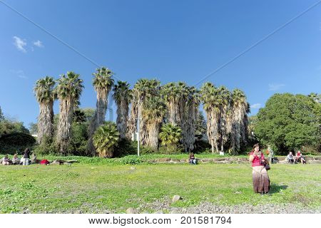 Israel. - February 17.2017. Palm Grove on the shore of the Sea of Galilee in Israel. Pilgrims walk on the beach.