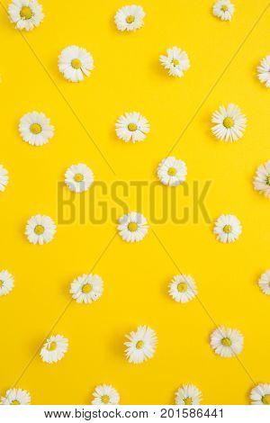 Floral pattern of white chamomile daisy flowers on yellow background. Flat lay top view. Floral background. Pattern of flower buds.