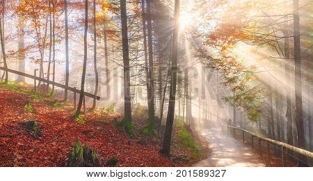 Cheerful panorama with a path through the colorful forest with autumn leaves under the dreamy light of the October sun rays in the Bavarian woods.