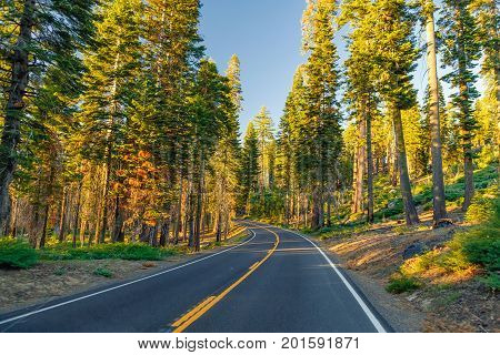 Beautiful road between the forest during sunset. at Yosemite National Park California, USA