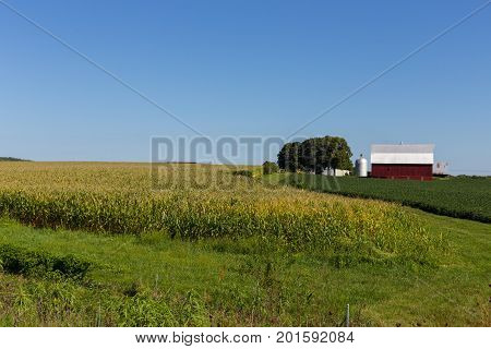 Red barn next to a corn field