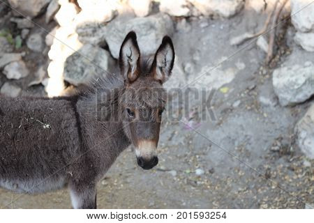 donkey adroble young donkey in a village