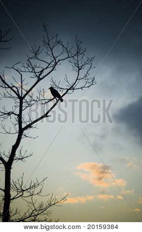 crow resting - slight noise