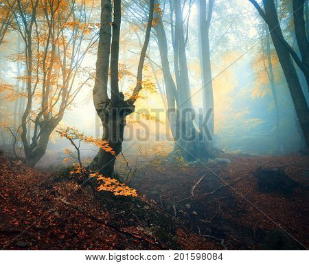 Fairy Forest In Fog. Fall Woods. Enchanted Autumn Forest