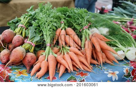 Piles of fresh just picked golden beets, carrots and fennel sit on a table with their stalks still attached.