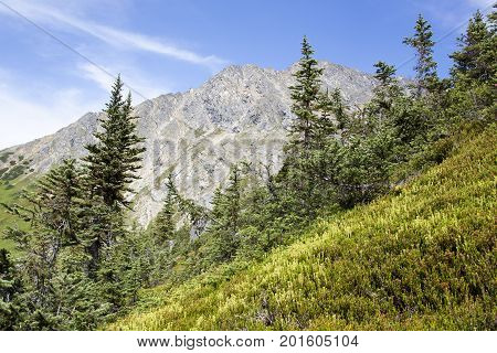 The surrounding landscape in Upper Dewey Lake area one kilometer above sea level (Skagway Alaska).