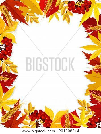 Autumn poster template with blank space and foliage frame of maple, poplar or chestnut and birch leaf, oak acorn and rowan berry. Vector wheat and rye harvest in falling leaves for autumn greeting