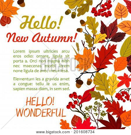 Hello Autumn poster with fall leaf border. Autumn season leaves, orange and yellow foliage of forest tree, acorn branch, red rowan berry with text layout for autumn nature holiday greeting card design
