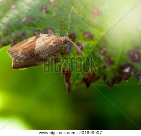 Awesome Small Moth Very Close Up Resting On Leaf