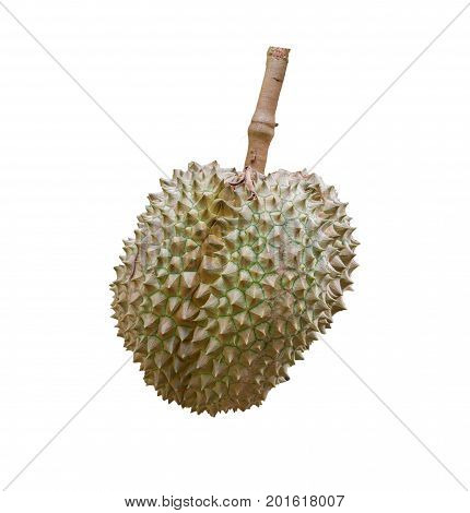 tropical fruits durian on white background healthy durian fruit food isolated close up