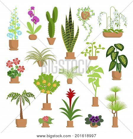 Window gardening infographic elements. Vector set of flat illustration of horticultural sundry, house plants and flowers in pots. EPS 10