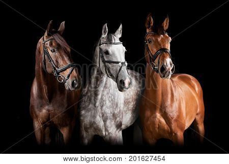 Different Horses Against Black Background