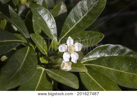 Pretty white color flore on a black background