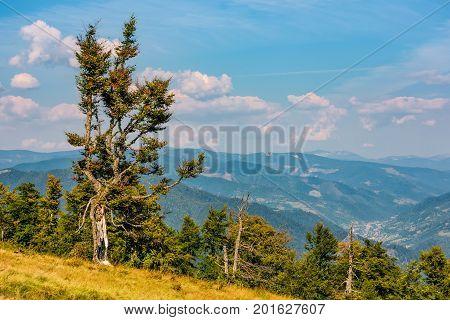 beautiful autumnal scenery with strange tree on a hillside above the mountain ridge
