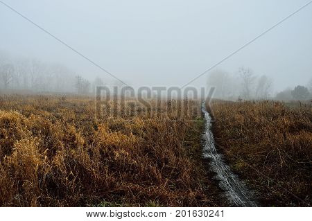 Road in the autumn mist on a gloomy day.