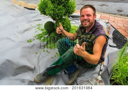 Gardener with a hedge trimmer cutting Thuja or boxwood in shape. poster