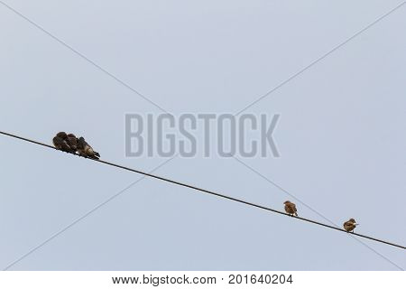 Small birds sitting on wire with blue sky background.