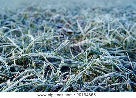 Autumn,  Frosty Grass In Morning