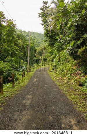 Gravel road in lush rain forest in the Portland Parish on the Eastern Coast of Jamaica on 30 December 2013.
