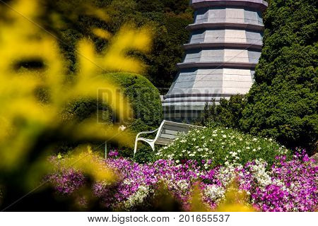 Chair among flowers, Doi Inthanon National Park, Chiang Mai, Thailand