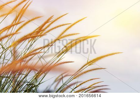meadow flowers in soft warm light. Vintage autumn landscape blurry natural background.