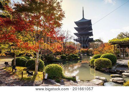 Colorful Autumn at Toji Temple against sunlight Kyoto Japan