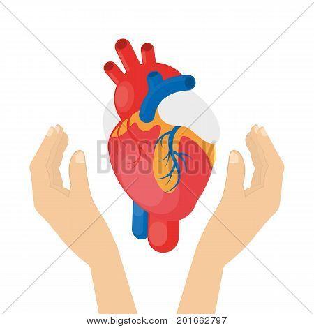 Heart in hands. Idea of organ donation and transplantation.