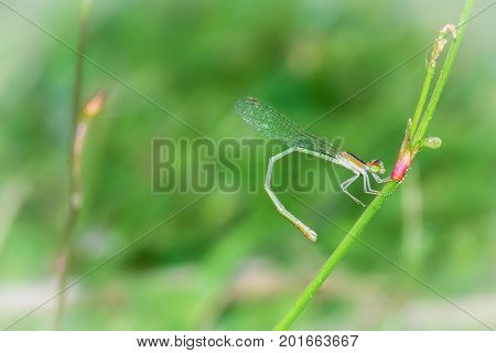 dragonfly outdoor in nature on green background