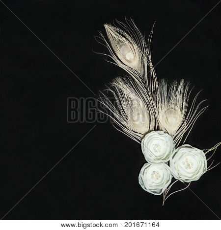 Black Dark Square Background With Gentle White Ranunculus Flowers and Peacock Feathers, Lying Flat, Top View. Have an Empty Place For Your Text.