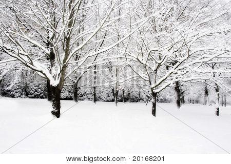 brrr monochromatic winter trees