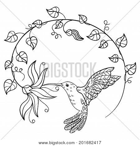 Hummingbird drinking nectar from a flower. A flying hummingbird inscribed in a circle of flowers. Stylized bird. Linear Art. Black and white vector illustration.