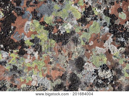Multicolored mosses, fungi and lichens of green, black, gray, white, ash color, growing on huge brown stone slabs, merge into a quaint camouflage pattern. Kola Peninsula, Tersky coast, White Sea