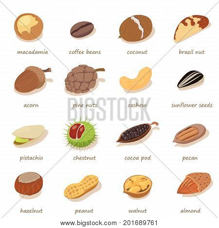 Nuts and seeds icons set. Isometric illustration of 16nNuts and seeds vector icons for web