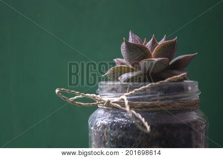 flower occulent in a jar, with rattan rope