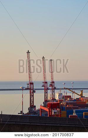 Three Cranes In Port Terminal