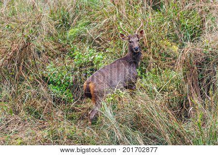 Deer At The Chitwan National Park, Nepal