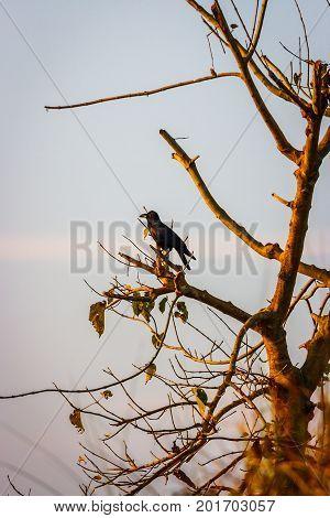 Bird On A Tree, Chitwan National Park, Nepal
