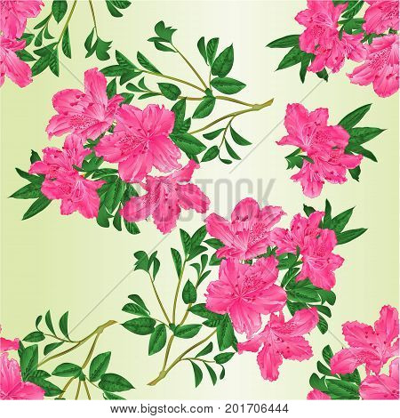 Seamless texture twig pink rhododendron with flowers and leaves vintage vector editable botanical illustration hand draw