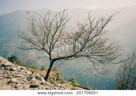 Tree On The Annapurna Base Camp Trek, Nepal
