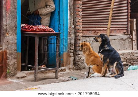 Two Dogs In Front Of A Butcher Shop, Kathmandu, Nepal