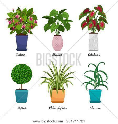 Cartoon houseplants isolated on white background. Indoor decorative house plants in pots vector illustration. Fuchsia and Myrtus, Aloe vera and Alocasia