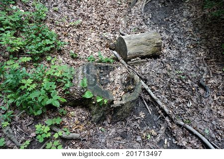 A tree stump decomposes in the bottom of a gully in the Hammel Woods Forest Preserve in Shorewood, Illinois, during July.